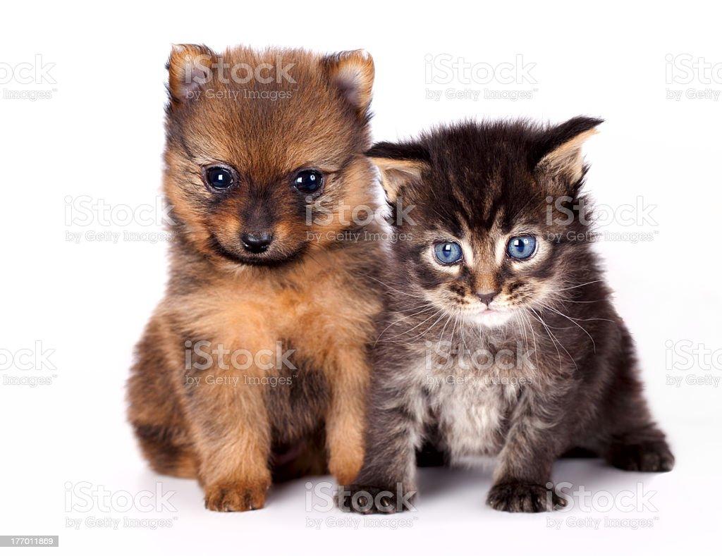 kitten   and puppy stock photo