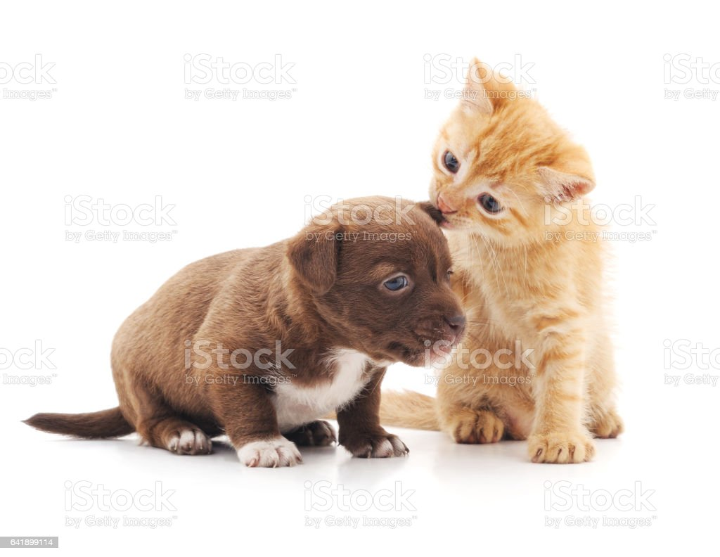 Kitten and puppy. stock photo