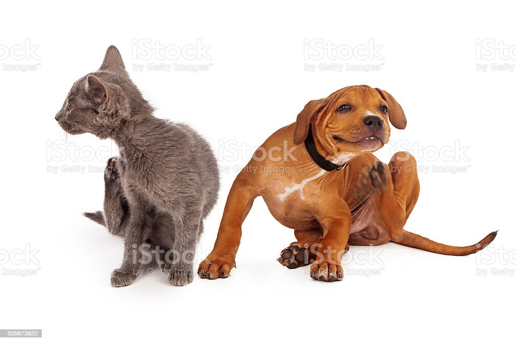 Kitten and Puppy Scratching stock photo