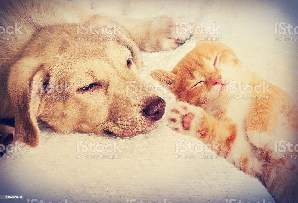 kitten and puppy sleeping stock photo