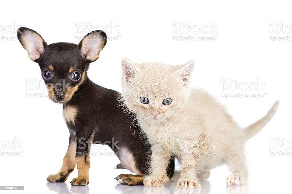 kitten and puppy with astonishment look royalty-free stock photo