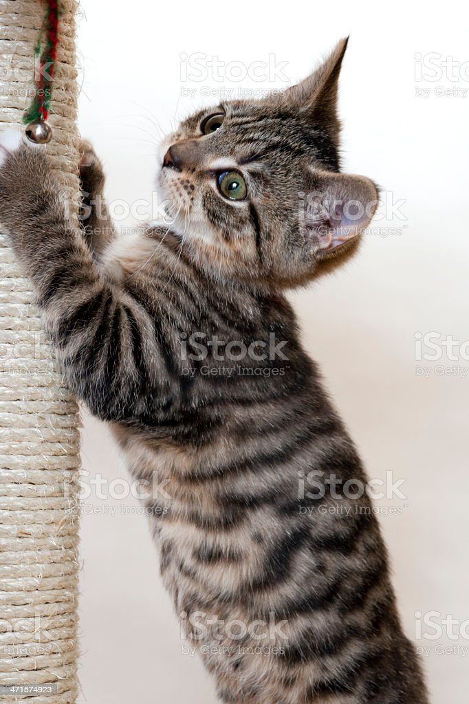 Kitten and scratching post stock photo
