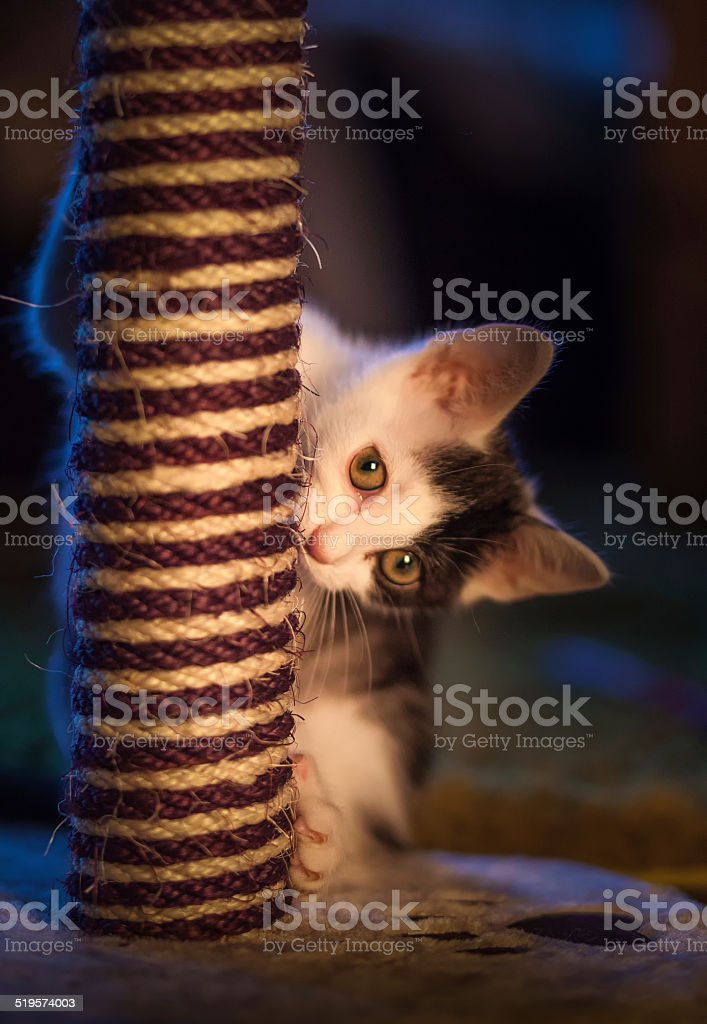 Kitten at play with scratch post stock photo