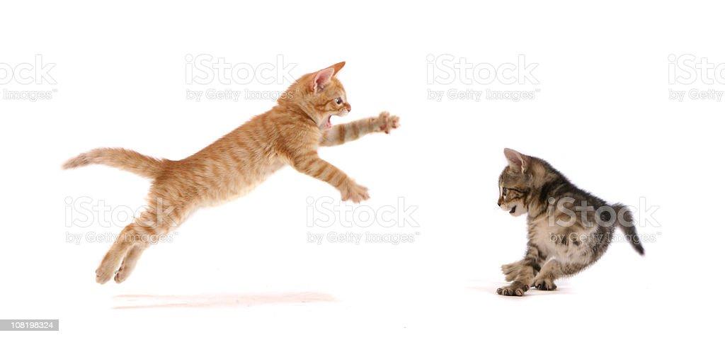 Kitten Attack ! royalty-free stock photo