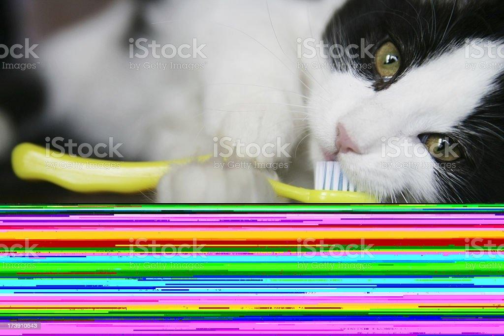 Kitten Brushing Her Teeth with Yellow Toothbrush royalty-free stock photo