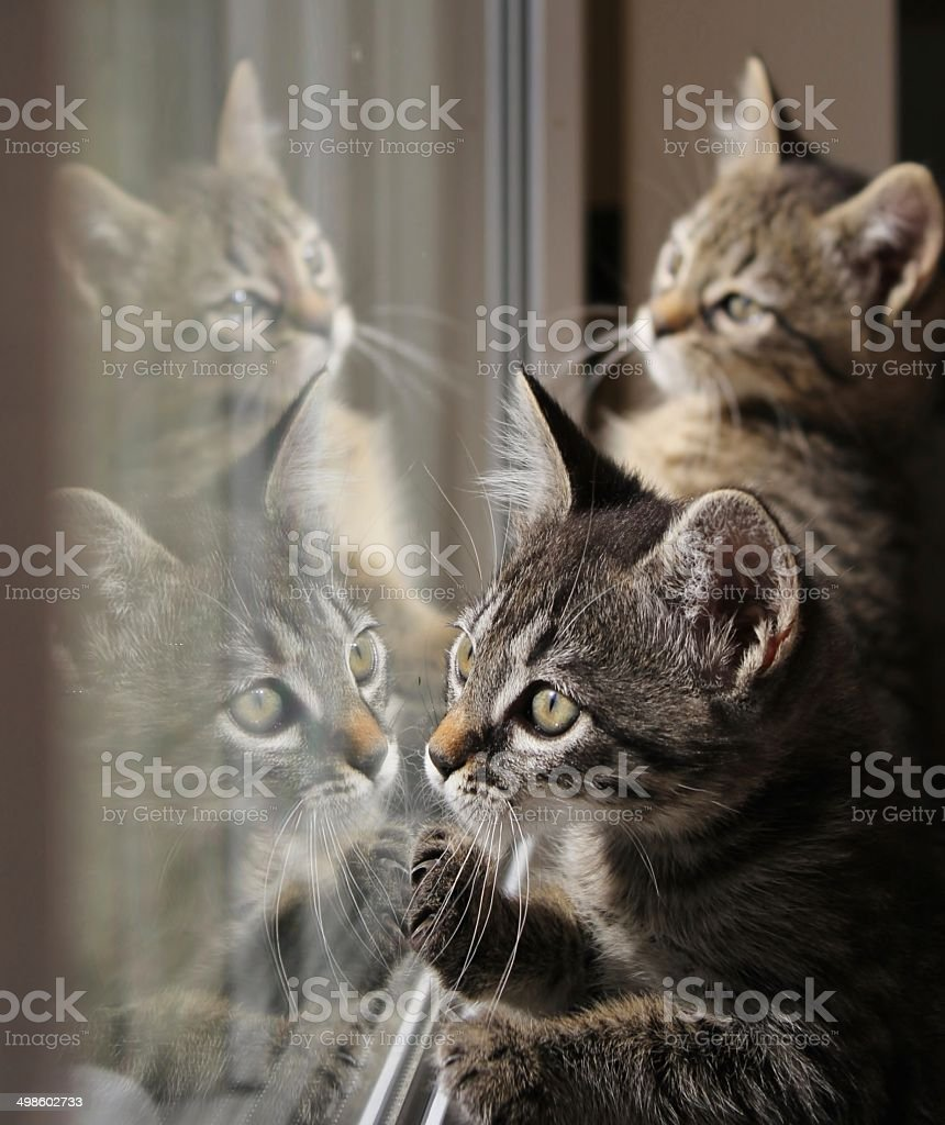 Kitten, cats, baby animal stock photo