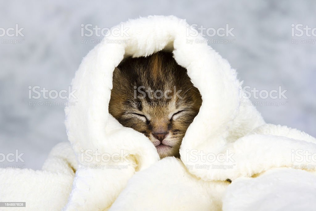 Kitten closed in towel stock photo