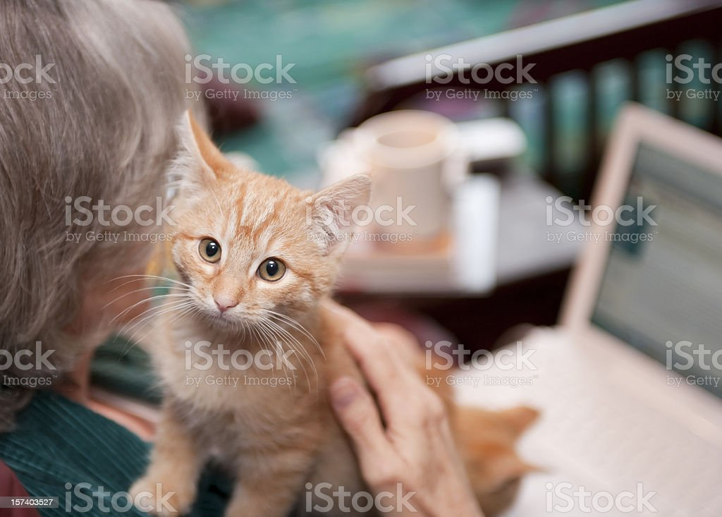 Kitten Companion stock photo