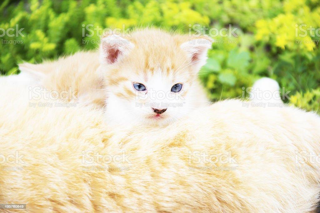 Kitten having a break stock photo