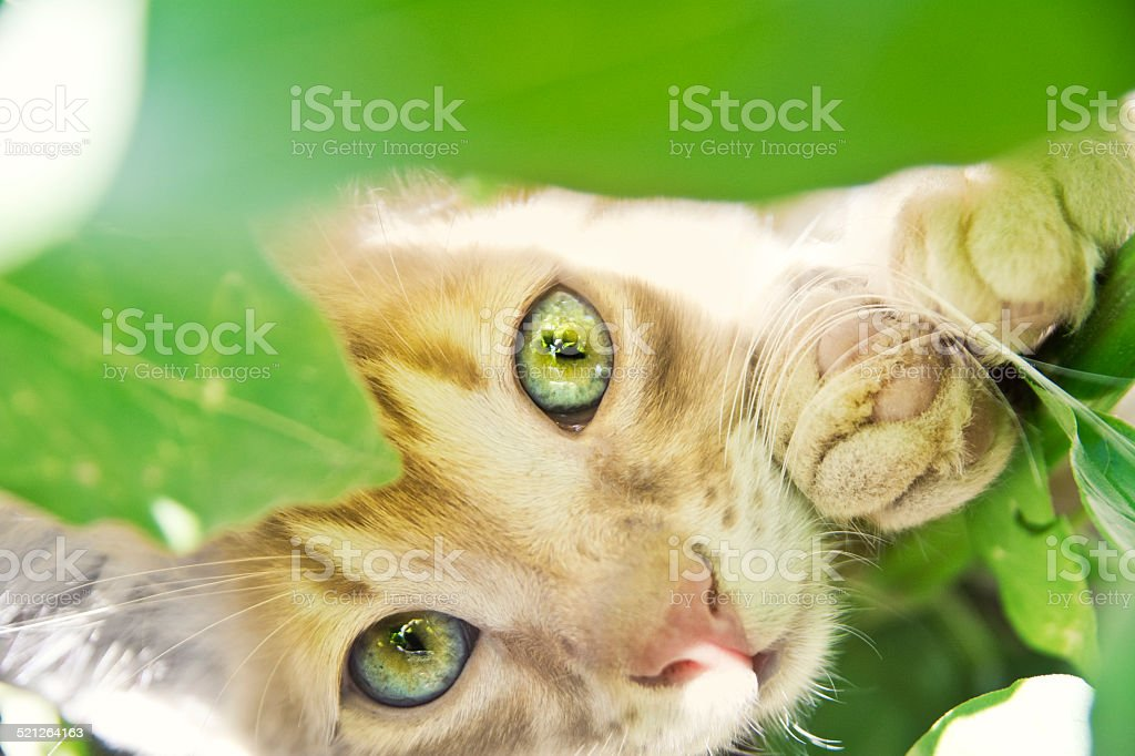 Kitten hidden in the garden stock photo