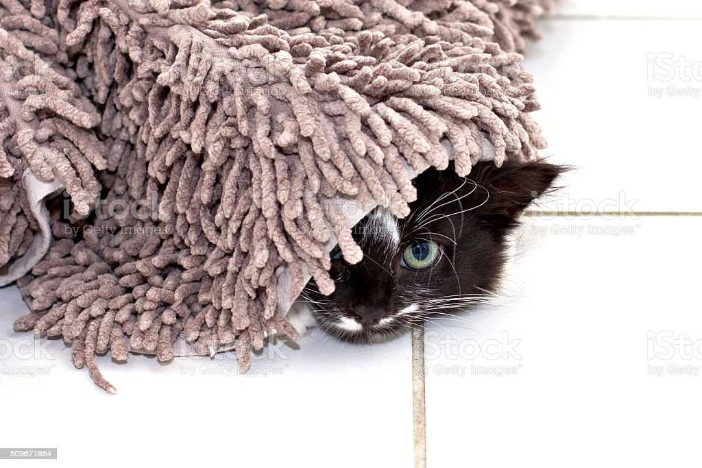 Kitten hiding under carpet stock photo