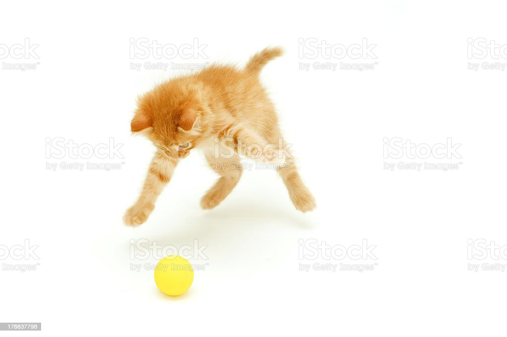 kitten hunts for ball stock photo