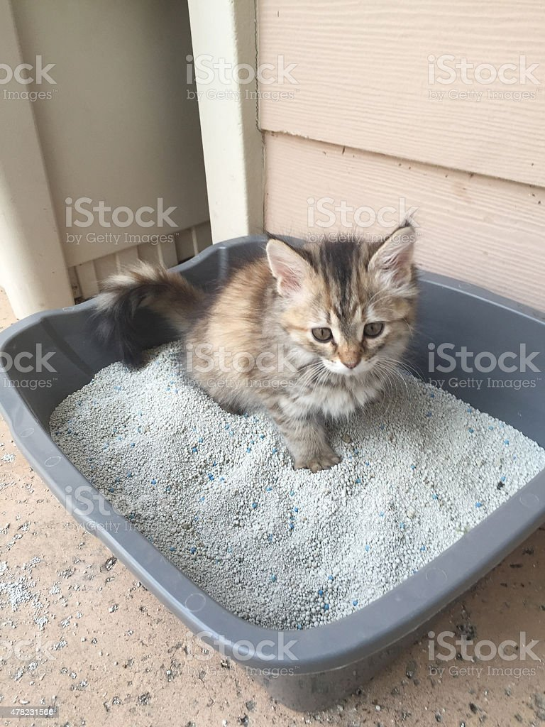 Kitten in a box stock photo