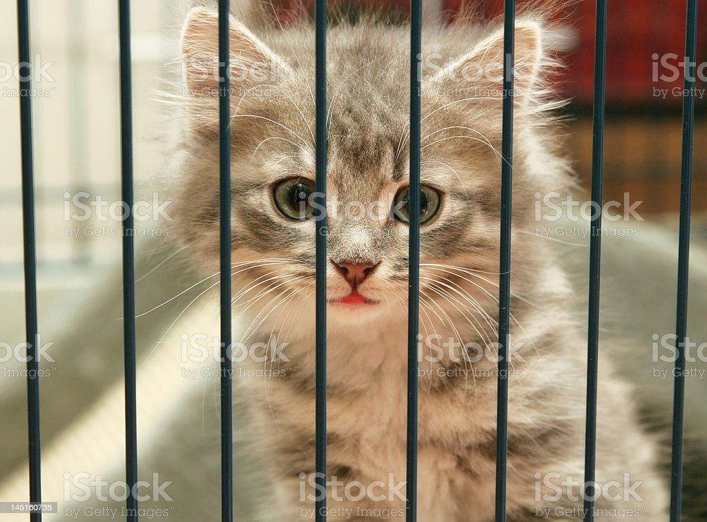 Kitten in a cage looking out stock photo