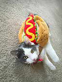 Kitten In A Hot Dog Costume