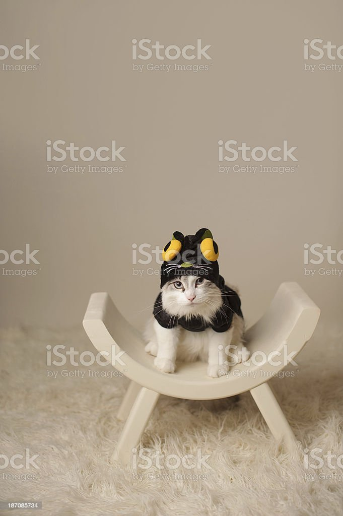 Kitten in Black Cat Costume stock photo