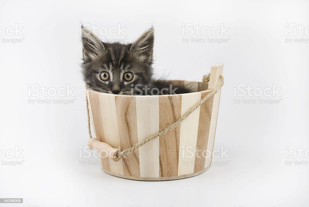 kitten in bucket royalty-free stock photo