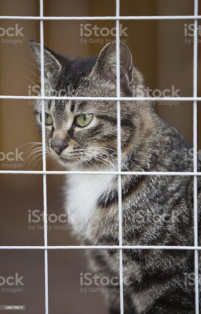 kitten in cage stock photo