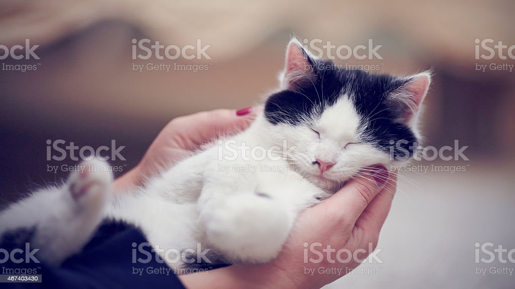 Kitten in caring hands. stock photo