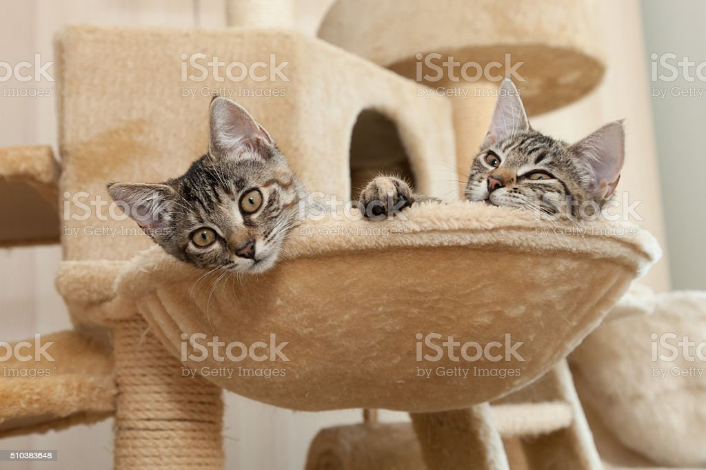 kitten in cat furmiture stock photo