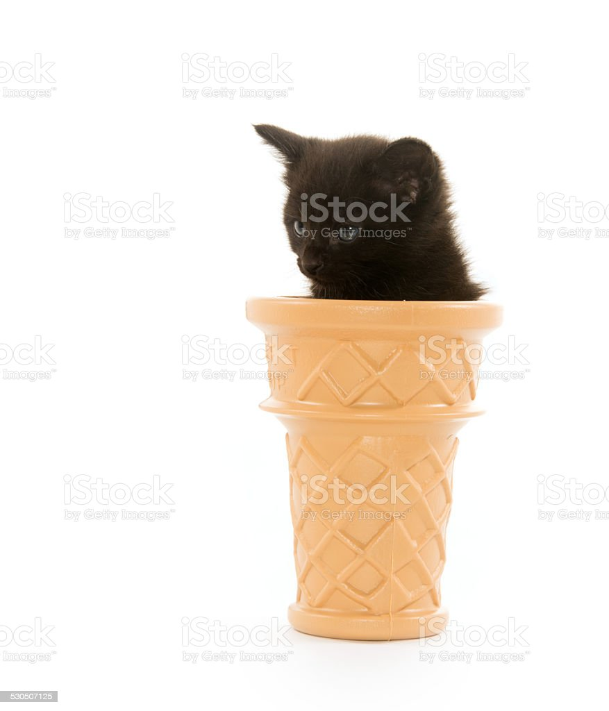 Kitten in ice cream cone stock photo
