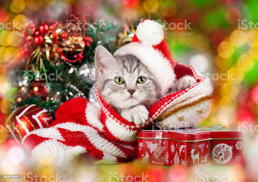 kitten in santa hat stock photo