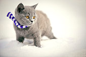 Kitten in snow