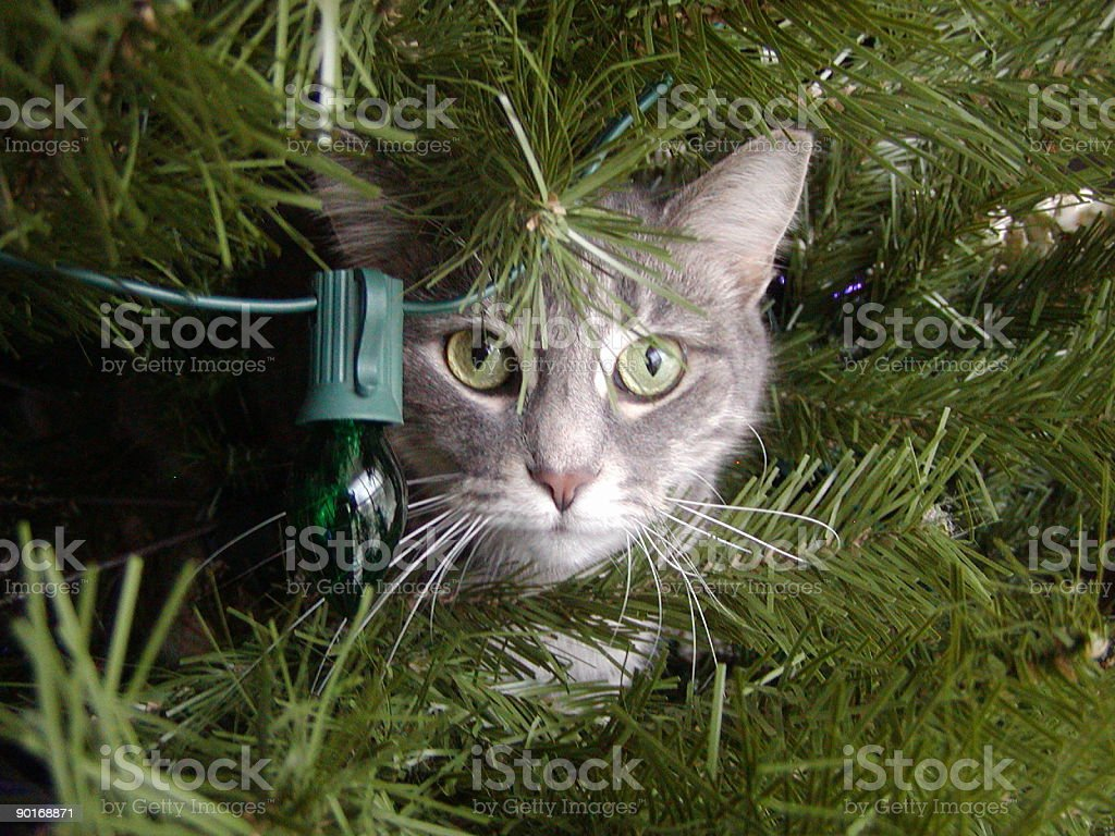 Kitten (CAT) in the Christmas Tree royalty-free stock photo