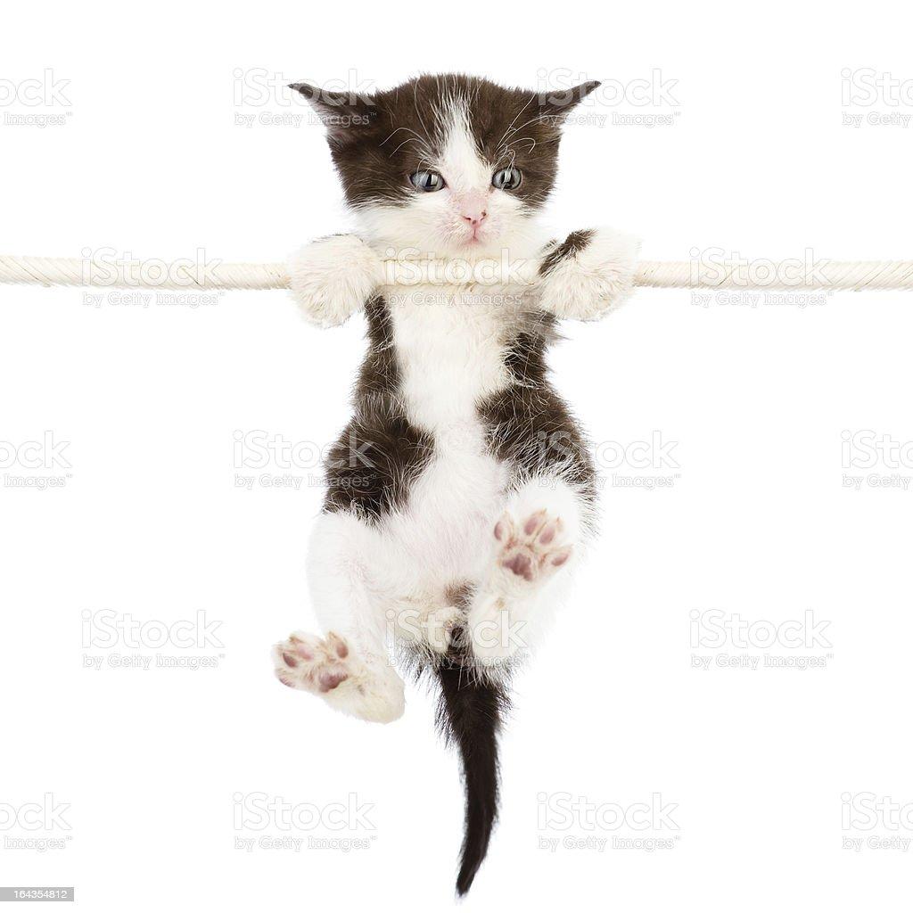 kitten is climbing on the rope stock photo