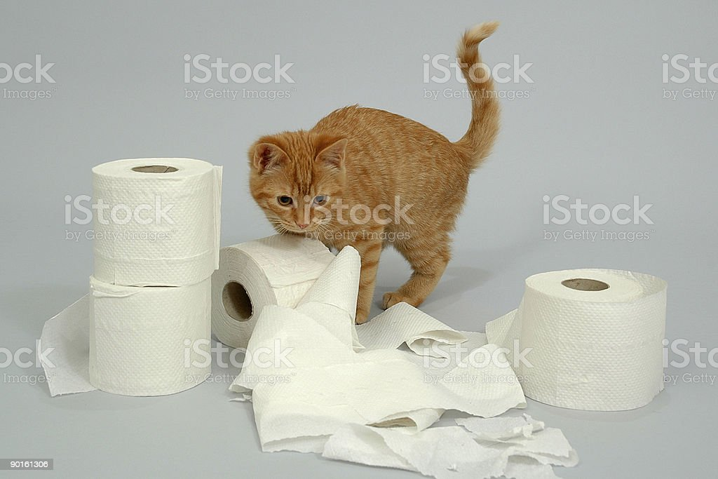 Kitten is playing royalty-free stock photo