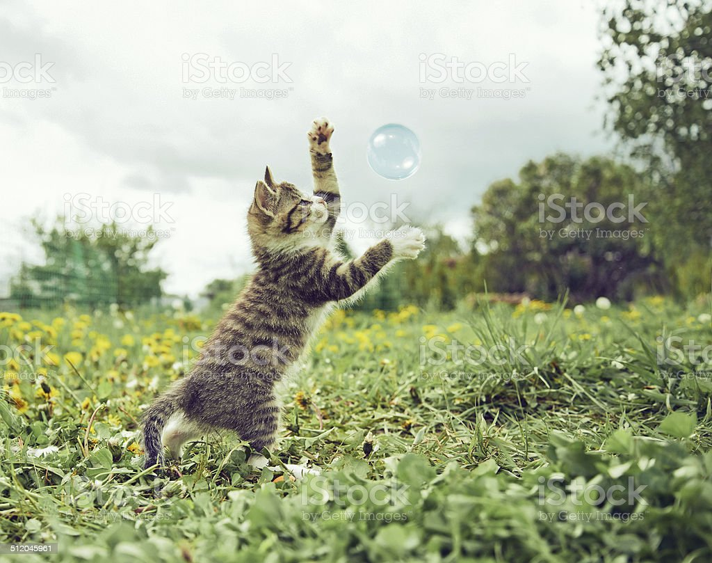 Kitten is playing with soap bubble stock photo
