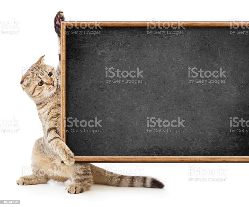 kitten isolated with blackboard for your text royalty-free stock photo