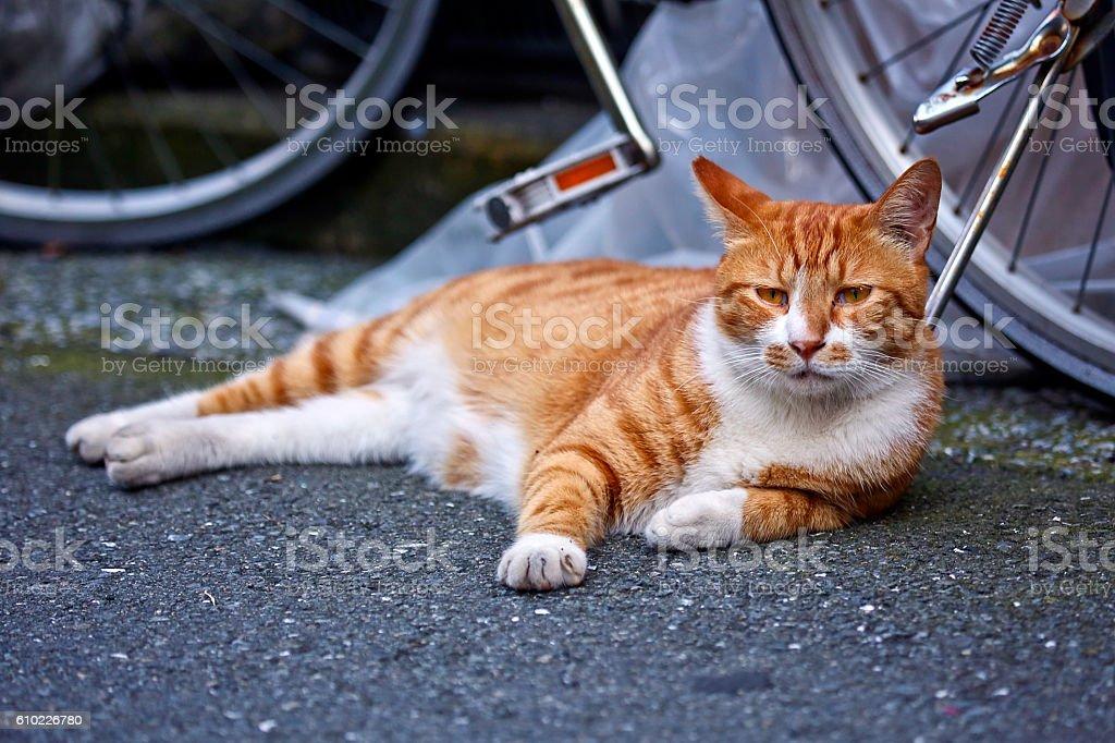 Kitten Lazy Afternoon stock photo