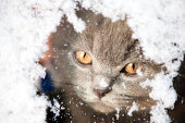 Kitten looking through a snowy window