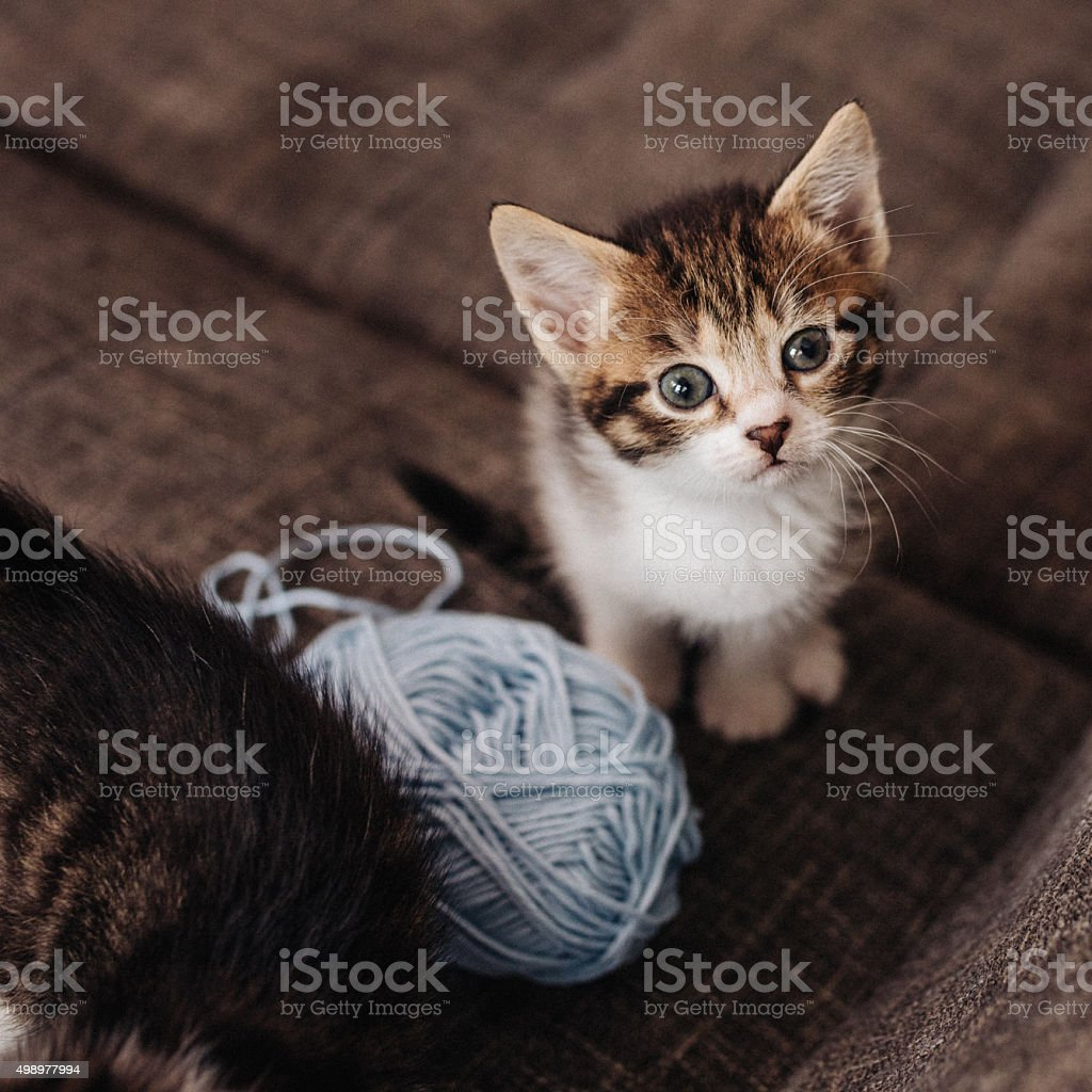 Kitten looking up next to ball of yarn on couch stock photo