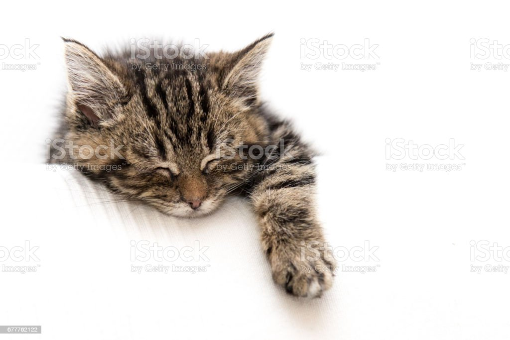 Kitten on a Couch stock photo