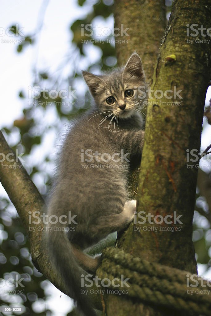 Kitten on a tree stock photo