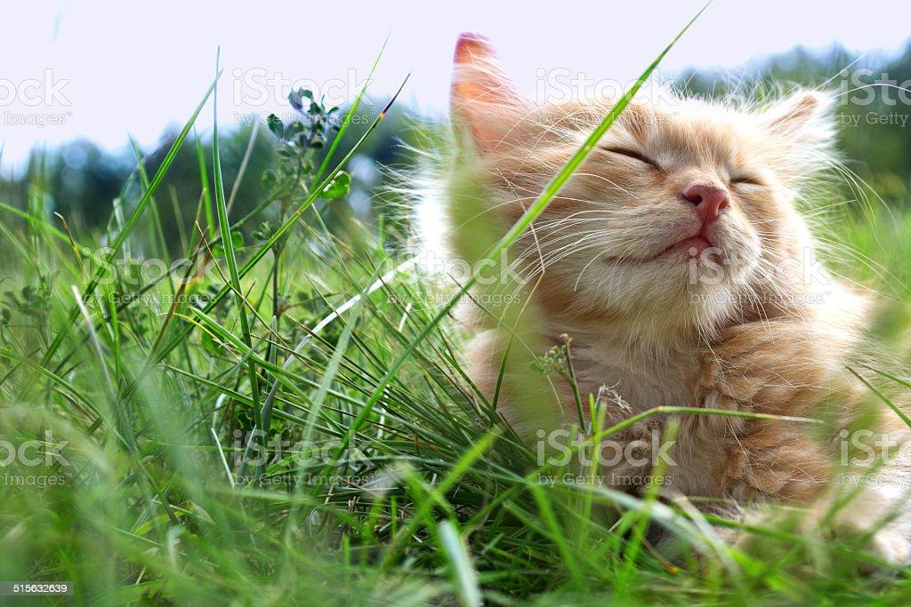 kitten on green grass stock photo