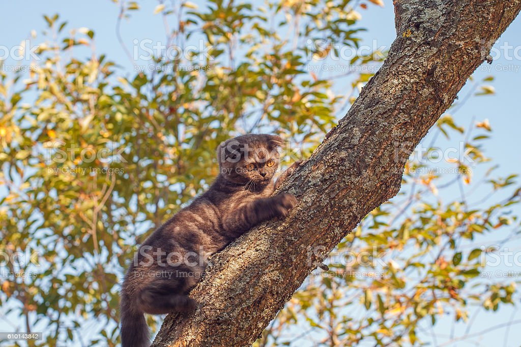Kitten on the tree stock photo