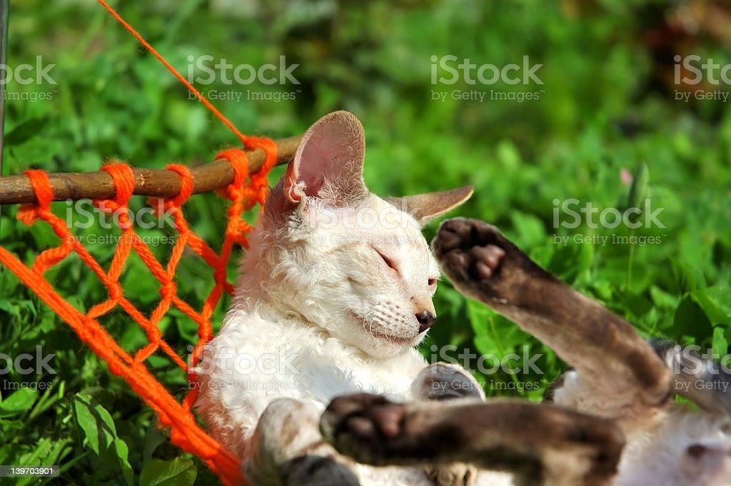 Kitten on weekend royalty-free stock photo