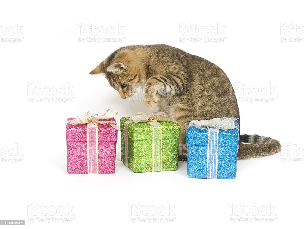 Kitten picking a present stock photo