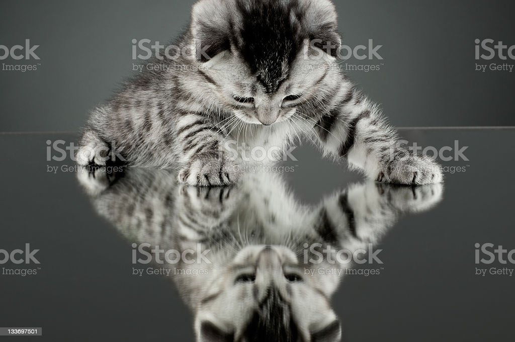 kitten royalty-free stock photo