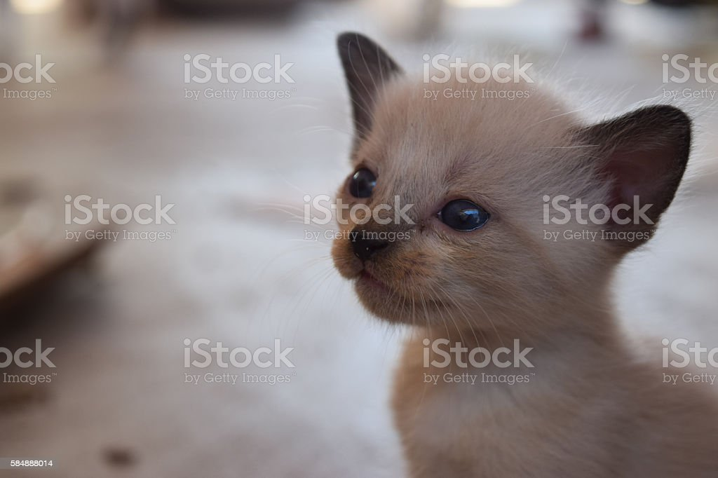 Micio  foto stock royalty-free