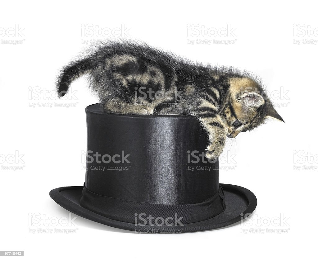 kitten playing on top hat royalty-free stock photo