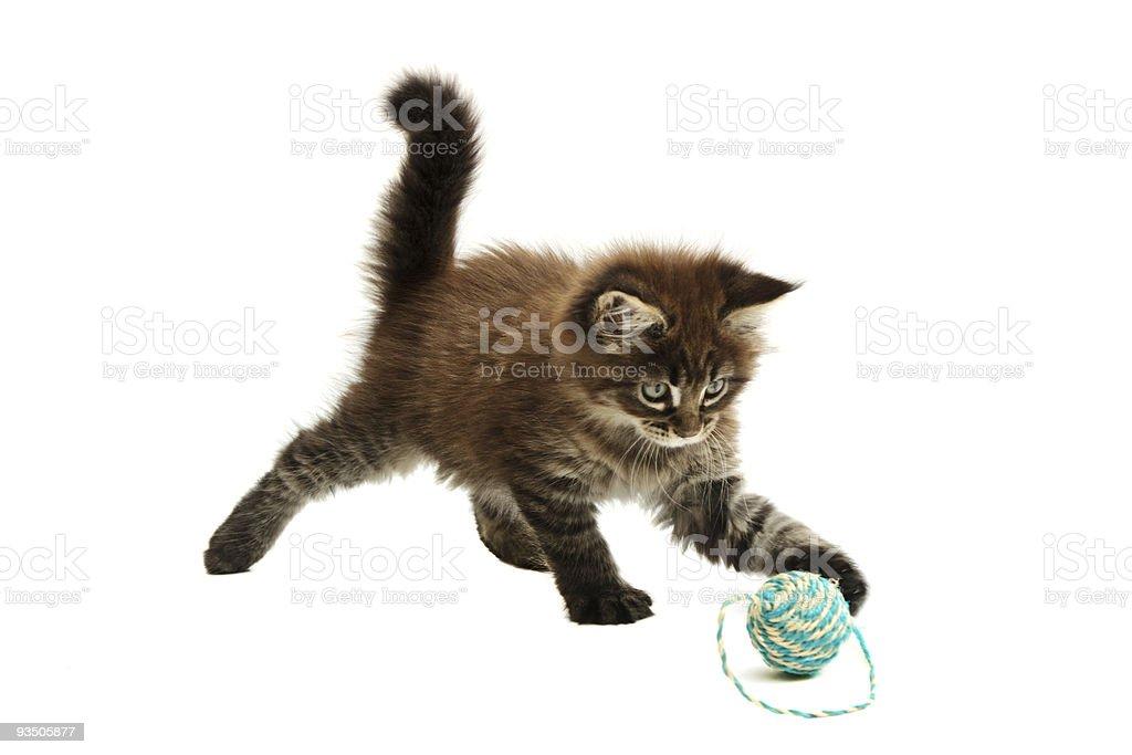Kitten playing royalty-free stock photo