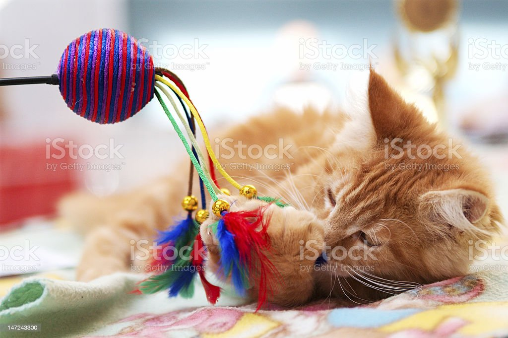 Kitten playing with ball and feathers stock photo
