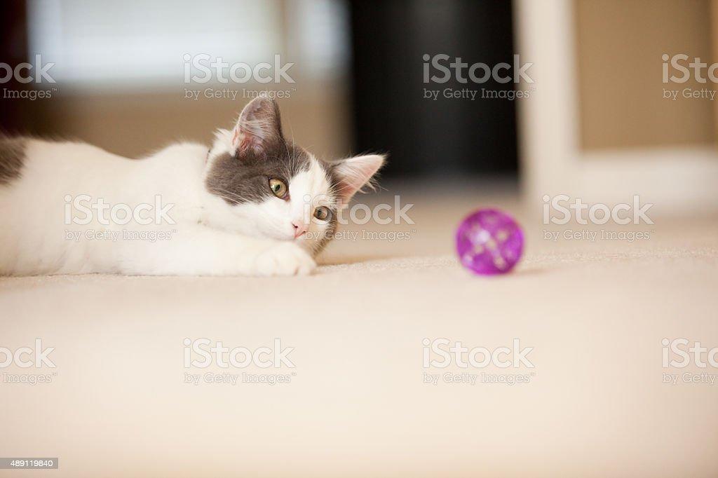 Kitten Playing With Ball On Floor stock photo