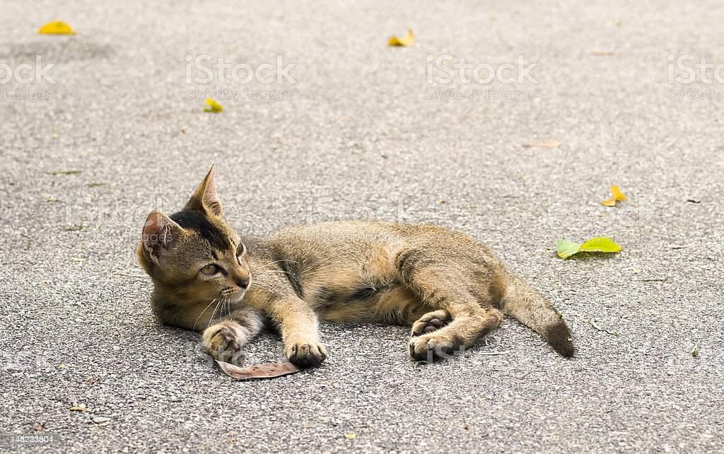 Kitten Playing with Leaves royalty-free stock photo