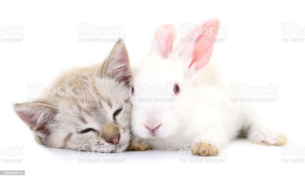 kitten playing with rabbit stock photo