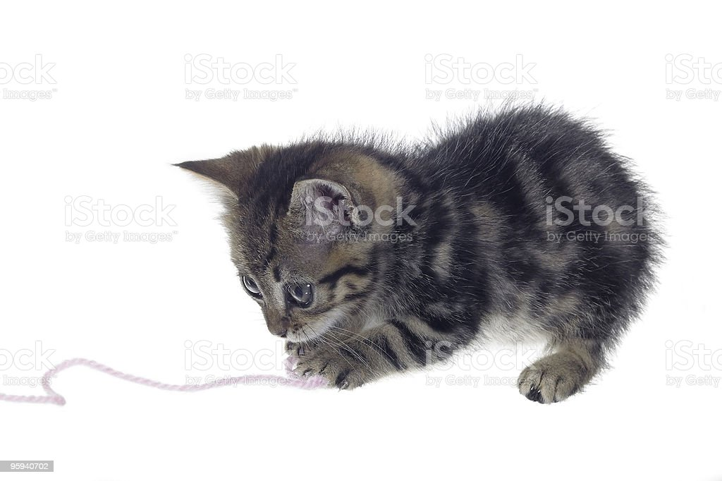 kitten playing with woolen twine royalty-free stock photo